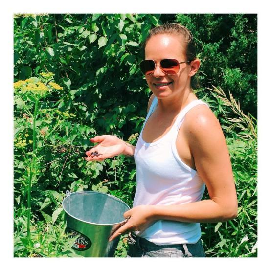 black raspberry picking